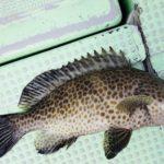 【オオモンハタ】初の「ボートロック」で爆釣。素人でも釣れたタックル&釣り方とは?
