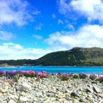 【ニュージーランド】星空は世界一!?テカポ観光の見どころ&ベストシーズンをざっくり解説