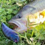 【淡路島】秋のシャローで爆釣!?野池の巻き物がポイント【バス釣り】